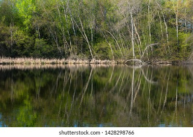 pond and forest scenery with reflections on water at salem hills park inver grove heights minnesota