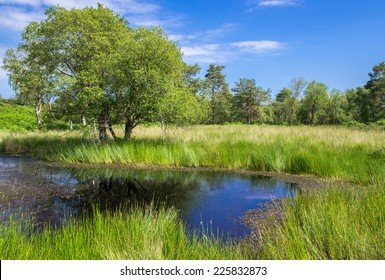 Pond and Grassland at Arne in the Dorset Countryside