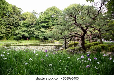 Pond at Heijan-jingu shrine garden, with blooming white and purple iris flowers in front. Kyoto, Japan
