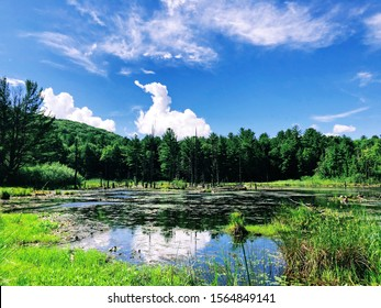 A pond inside Sunnybrook State Park in summer in New England Torrington Connecticut United States.