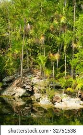 Pond in jungle of Xel-ha, Riviera Maya, Mexico