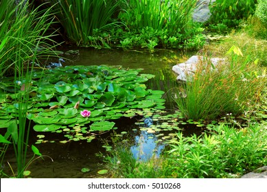 Pond landscaping with aquatic plants and water lilies