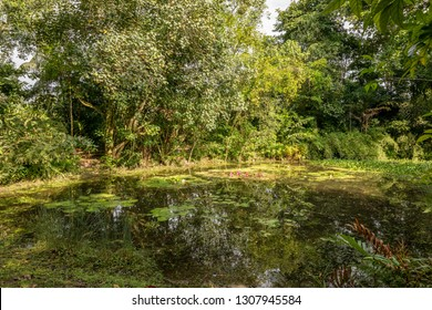 Pond with lily pads at the Wetland Center at Sungei Buloh Wetland Reserve.