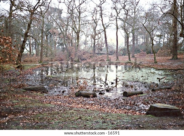 Pond in the middle of Richmond Park, near London (UK) in autumn
