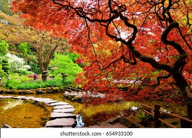 Pond with overhanging red Japanese maples during springtime, Victoria, BC, Canada