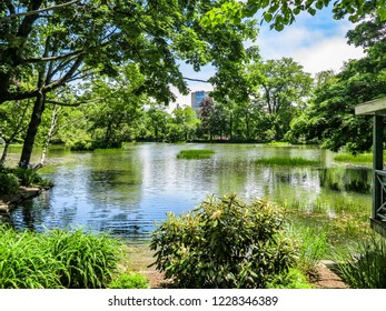 A pond in a park surrounded by trees