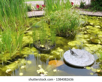 Pond plants, bamboo, algae, and sundial comprise a water garden at Callaway Gardens, Pine Mountain, Georgia.