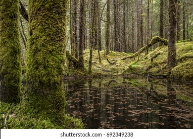 Pond reflecting in the Tongass rainforest in Juneau, Alaska