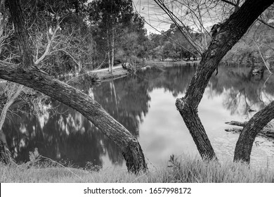 pond reflection black and white tree