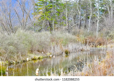 Pond reflections in Flintstone, Maryland