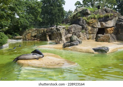 pond with seals in the Berlin Zoo (Zoological garden). It's the oldest garden in Germany with most comprehensive collection of species in the world