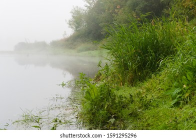 Pond shore with bunches of grass. The pond is covered with dense fog. Dew drops are on the grass