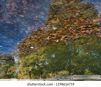 A pond shown upside down with trees mirrored on the water surface. Some leaves on the surface and the ground of the pond showing some details and structures