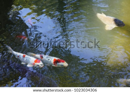 https://image.shutterstock.com/image-photo/pond-shrine-shizuoka-450w-1023034306.jpg