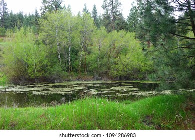 A pond is surrounded by green forests at Clay-Flat near Missoula, Montana.
