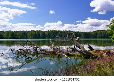 pond under a blue sky with clouds with a falling tree in the foreground