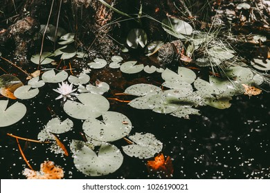 Pond with water lily in dark contrast film tones