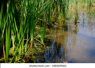 Pond and wetland vegetation in New York