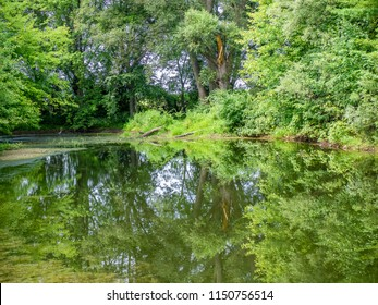 Pond in the woods in high summer