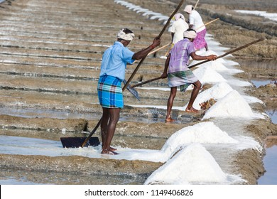 PONDICHERY, PUDUCHERRY, TAMIL NADU, INDIA - MARCH CIRCA, 2018. Unidentified men workers picking up, collecting the salt, in big salt fields, manual labour, organic agriculture, very hard job