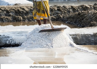 PONDICHERY, PUDUCHERRY, TAMIL NADU, INDIA - MARCH CIRCA, 2018. Close-up Unidentified women workers picking up, collecting the salt, in big salt fields, manual labour, organic agriculture very hard job
