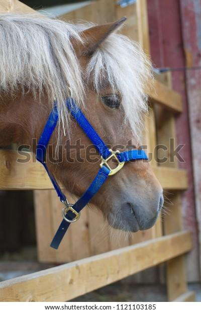 poney horse head farm ranch country animal