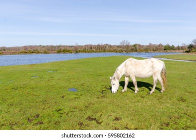 Ponies near Burbush, in the New Forest National Park