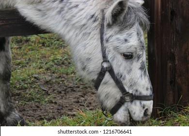 Ponny in the farm