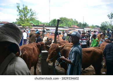Ponorogo, Indonesia - October 8,2020: old man standing among brown cows for buying and selling cows at the Ponorogo animal market, East Java Province, Indonesia on October 8, 2020