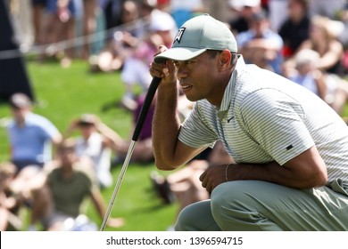 PONTE VEDRA BEACH, FLORIDA-MAR 14: Tiger Woods lines up a putt during the first round of The PLAYERS Championship on The Stadium Course at TPC Sawgrass on March 14, 2019 in Ponte Vedra Beach, Florida.