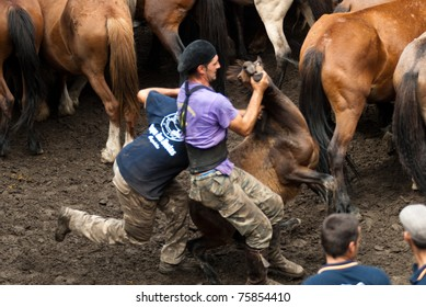 """PONTEVEDRA - AUGUST 2: Two """"fighters"""" try to immobilize  a wild horse in a traditional celebration """"Haircut the beasts"""" on August 2, 2009 in Pontevedra, Spain."""