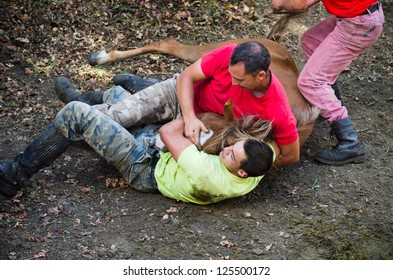 """PONTEVEDRA, SPAIN - AUGUST 5: Unidentified horsemen (Loitadores) attempt to immobilize a wild horse, to cut the mane, in a traditional  """"Haircut to the beasts"""" on August 5, 2012 in Pontevedra, Spain."""