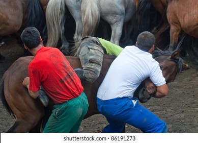 """PONTEVEDRA, SPAIN - AUGUST 7: Unidentified fighters (Loitadores) try to tame horse, separating the offspring of wild horses, in a traditional celebration """"Haircut to the beasts"""" on August 7, 2011 in Pontevedra, Spain."""
