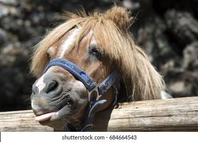 Pony with a hair Funny pony Pony portrait