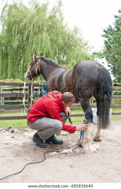 Pony having his legs clipped of all feather, to help avoid itching in the summer heat.