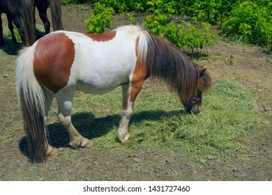 pony horse farm animal eating grass equestrian field