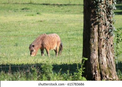 Pony Ivy - Spring In Tennessee