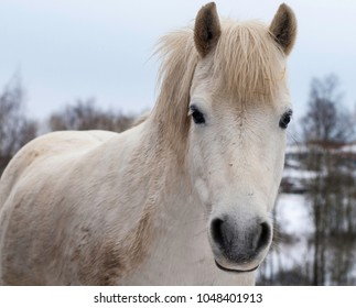Pony looking at camera during winter