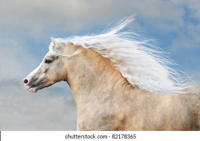 pony portrait in action