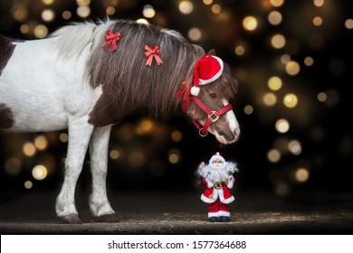 Pony portrait in santa red hat against christmas lights