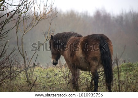 pony at rest in damp conditions