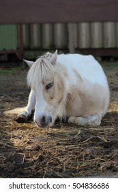 pony sleeping