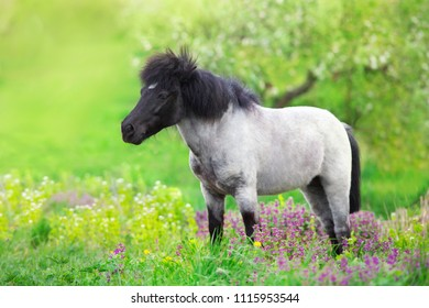 Pony standing in flowers meadow