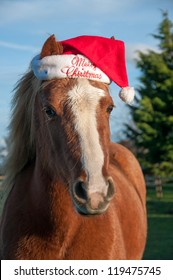 Pony wearing a hat with a Christmas message