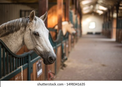 A pony's head over the loosebox gate in the stable