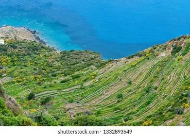 Ponza, Pontine Islands, Latina district, Latium, Italy, National Park of Circeo, vineyards in Punta Fieno
