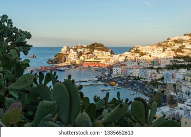 Ponza, Pontine Islands, Latina district, Latium, Italy - May, 05, 2017: View of the port and the village with typical colored houses, in the foreground Prickly pears