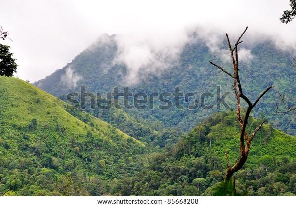 """poo soi dao"" national park, thailand"