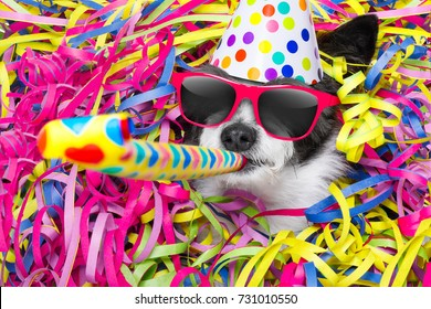 poodle dog having a party with serpentine streamers, for birthday or new years eve and blowing a whistle horn wearing sunglasses and a hat