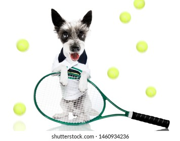 poodle  dog with owner as tennis player with ball and racket or racquet isolated on white background, ready to play a game